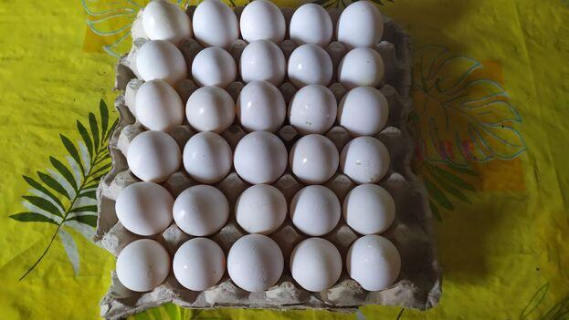 El cartón de huevos estaba a 175 pesos en La Habana, este miércoles. (14ymedio)