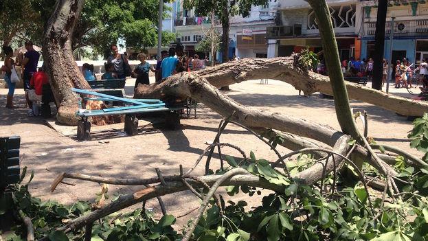 La caída del tronco de un árbol en el céntrico parque Fe del Valle, en La Habana. (14ymedio)