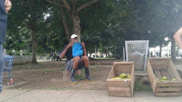 En el mercado informal es difícil encontrar un ejemplar de esta deliciosa fruta por menos de 5 CUP. (14YMEDIO)
