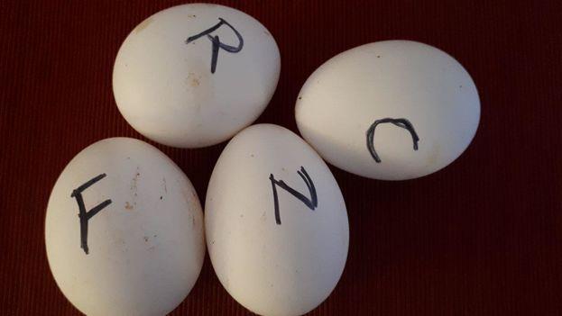 Una pareja de jubilados ha escrito una inicial en cada huevo para gestionar el déficit que afecta todo el país y evitar disputas en el hogar. (14ymedio)