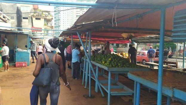 Los mercados agrícolas en La Habana están cada vez más desabastecidos o con precios elevados. (14ymedio)
