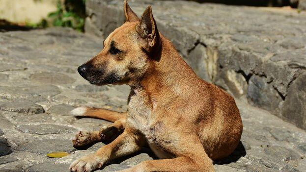 Los participantes criticaron duramente el uso de veneno para matar a los perros callejeros. (N. Karim)