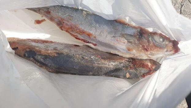 El precio de estos dos pescados es de 60 CUP. (14ymedio)