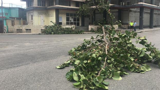 Las primeras ramas de árboles que caen en la capital cubana bajo los vientos del huracán Irma. (14ymedio)