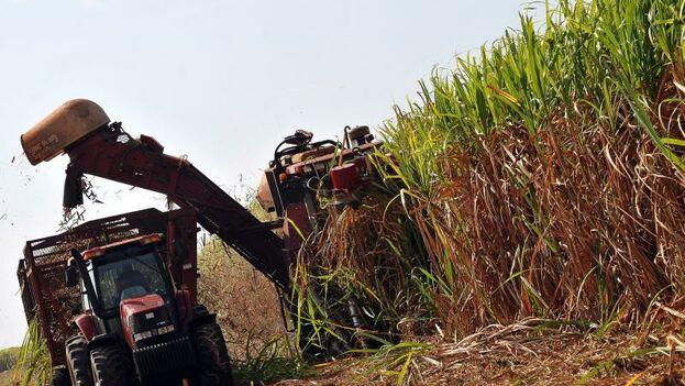 La producción azucarera fue por décadas el motor económico de Cuba pero la mala gestión estatal arruinó las fábricas y los campos. (Cortesía)