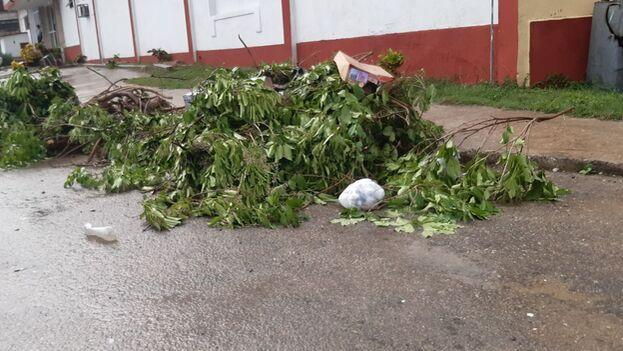La tormenta provocó daños en la vegetación, principalmente se reportaron la caída de ramas. (14ymedio)