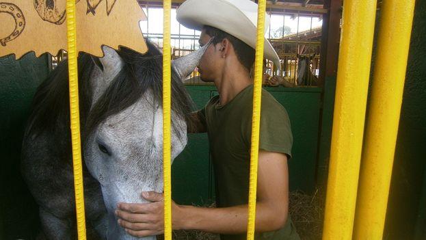 Un trabajador peina un caballo antes de la subasta. (14ymedio)