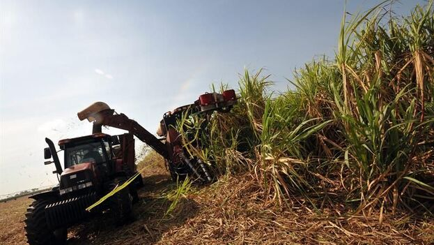 García precisó que se estima un incremento de la exportación de azúcar producida en la actual cosecha, en lo fundamental hacia el mercado chino. (EFE)