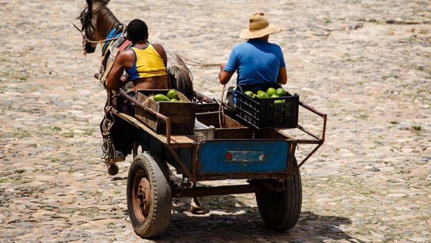 Los agricultores privados distribuyen sus cosechas entre los mercados de oferta y demanda y los negocios por cuenta propia. (S. VAlice)