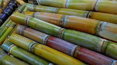 La sociedad cubana ha estado profundamente marcada por el cultivo de la caña de azúcar que el militar español Diego Velázquez introdujo a finales del siglo XIV. (Pixabay)