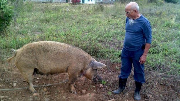 Eduardo Díaz Fleitas en su finca. (14ymedio)