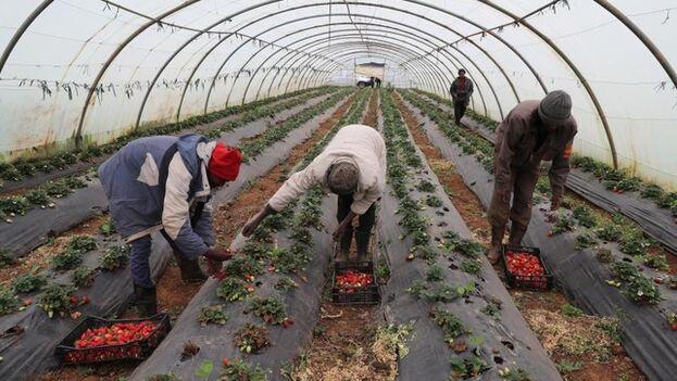 """África, ante una """"crisis económica sin precedentes"""" y una oportunidad única. (EFE)"""