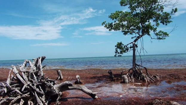 La isla Big Munson, a la cual llegaron los balseros cubanos. (Redes)
