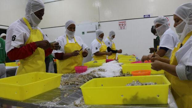 China suspendió las importaciones de camarones ecuatorianos tras haber encontrado restos de coronavirus en su empaquetado. (Ministerio de Comercio de Ecuador)
