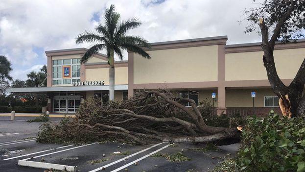 """El alcalde de la ciudad de Miami, Tomás Regalado, dijo que había """"miles de árboles derribados"""" por el huracán. (14ymedio)"""