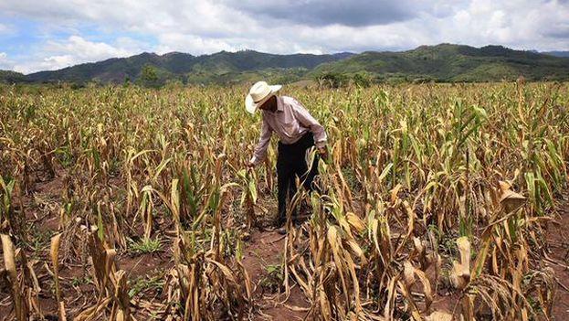 El Gobierno ha asegurado que las zonas castigadas por la sequía serán un modelo tras la aplicación del plan. (@Presidencia_HN)