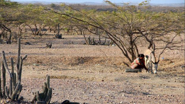 La sequía de El Niño ha afectado a gran parte de los países de Latinoamérica. (EFE)