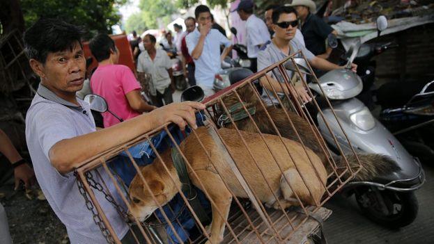 Taiwán se ha convertido en el primer país asiático en prohibir comer carne de gato y perro, y no sólo venderla o sacrificar a esos animales. (EFE)