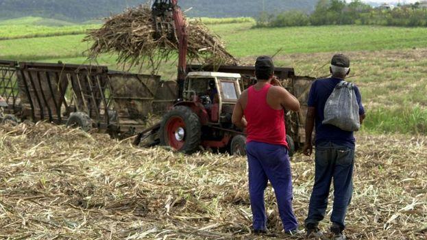 Dos campesinos cubanos observan la deteriorada maquinaria con la que se hace la zafra en un campo de cana de azúcar. (EFE/Archivo)