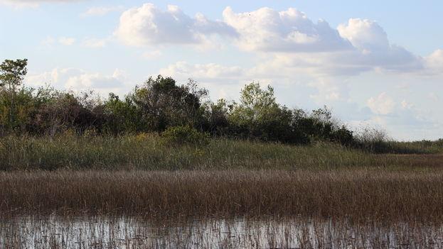 Los científicos prevén que para 2100 el nivel del mar alcanzará casi dos metros de altura, inundando progresivamente los humedales del sur de Florida.