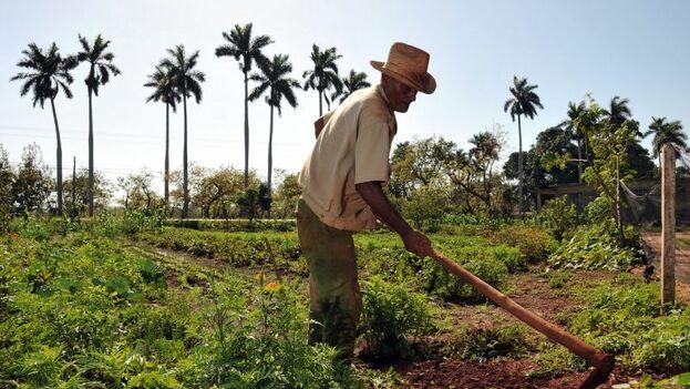 En noviembre pasado una delegación de políticos y empresarios agrícolas estadounidenses abogaron en La Habana por el levantamiento del embargo. (EFE)