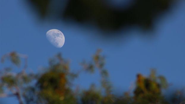 La luna en su fase creciente vista desde los humedales del sur de la Florida.