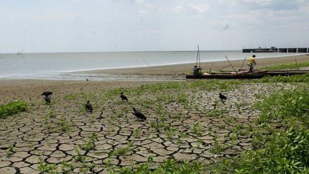 Comunidades del centro y este cubano reportan pérdidas por sequía. (EFE)