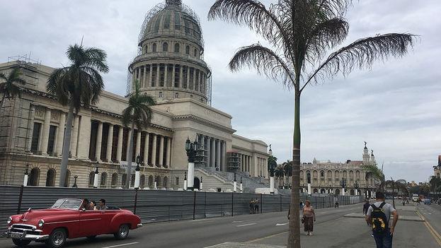 Frente al Capitolio de La Habana han vuelto a sembrar seis palmas reales, después de que murieran las anteriores. (14ymedio)
