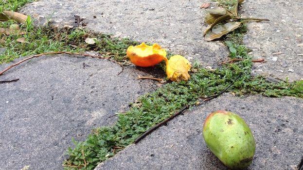 Mangos. (14ymedio)