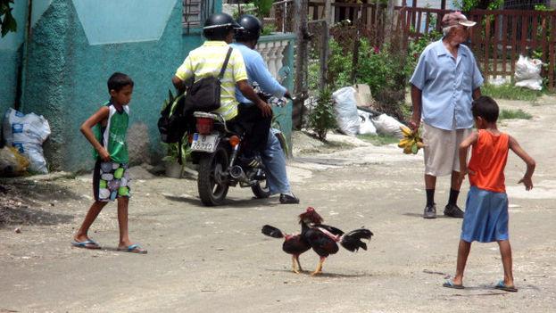 Niños en una pelea de gallo en las calles de Holguín. (14ymedio)