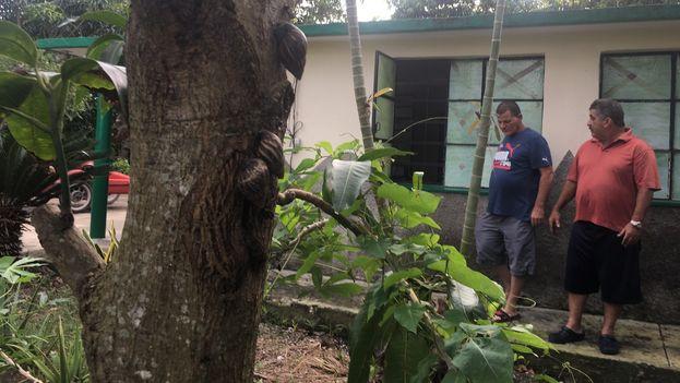 El la finca Santa Ana, del habanero municipio Arroyo Naranjo, los residentes están desesperados por encontrar una solución a la plaga de caracoles africanos. (14ymedio)
