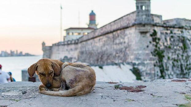 Entre las faltas atribuidas a Zoonosis se enumeró la forma inapropiada en que son capturados los animales en la calle, en muchas ocasiones de forma violenta. (Andrestand)