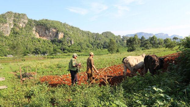 Las autoridades están haciendo un llamado a los campesinos a sembrar cada metro de tierra disponible. (Flickr/tTnman6)