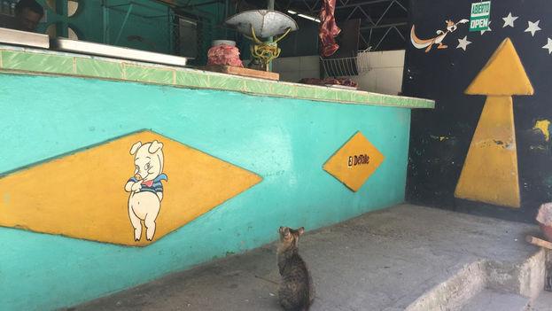 Mientras en otros países proliferan los vegetarianos y los veganos buena parte de los cubanos se considera orgullosamente carnívora. (14ymedio)