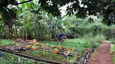 En la medida en que arrecia el desabastecimiento de productos, muchos cubanos apuestan por sembrar hierbas aromáticas y vegetales en sus patios. (Flickr/Alexander. Kafka)