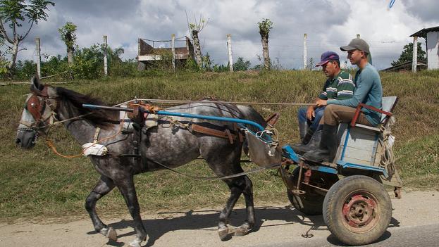 Las arañas han evitado que el guajiro cubano se quede en la inmovilidad a la que obliga el colapso del transporte. (Frank K.)
