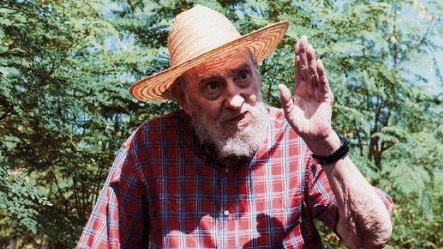 El expresidente cubano, Fidel Castro, dedicándose al cultivo de moringa. (EFE)