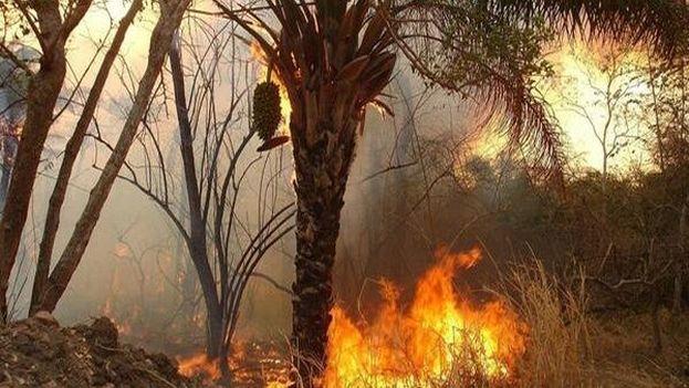 El incendio destruyó más de 5.000 hectáreas de plantaciones y bosques en la provincia de Holguín. (Archivo/Telesur)