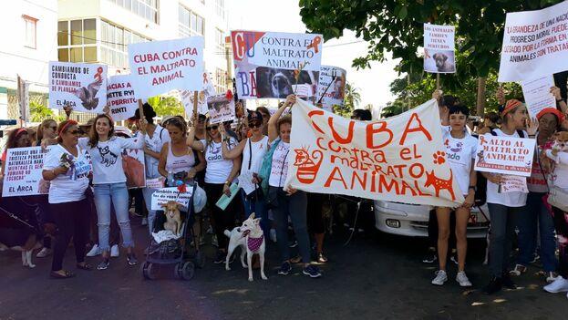 La manifestación contra el maltrato animal en Cuba es un hecho inédito en el país. (14ymedio)