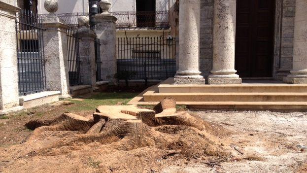 El lugar donde hasta este martes se erigía la mítica ceiba del Templete en La Habana. (14ymedio)