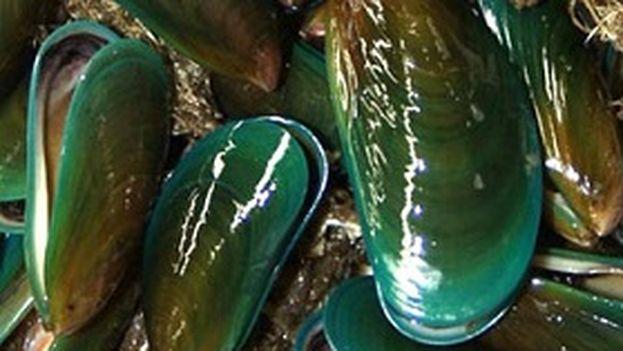 El mejillón verde. (Red Cubana de la Ciencia)