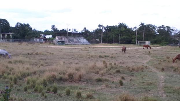 El terreno donde se realizaba el campeonato está lleno de malas hierbas y pastan caballos diariamente. (Cortesía)