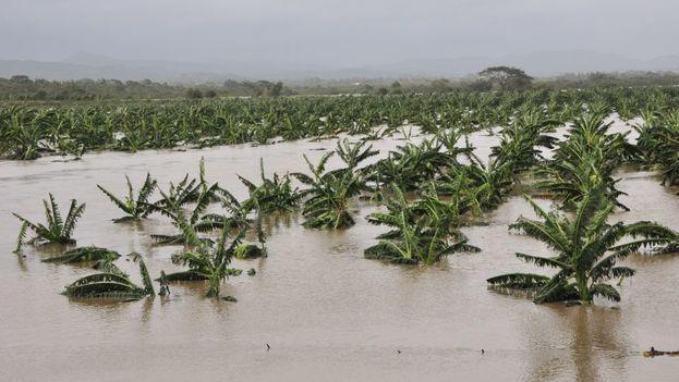 Los daños sufridos por la agricultura están entre los que más costará recuperar. (captura)