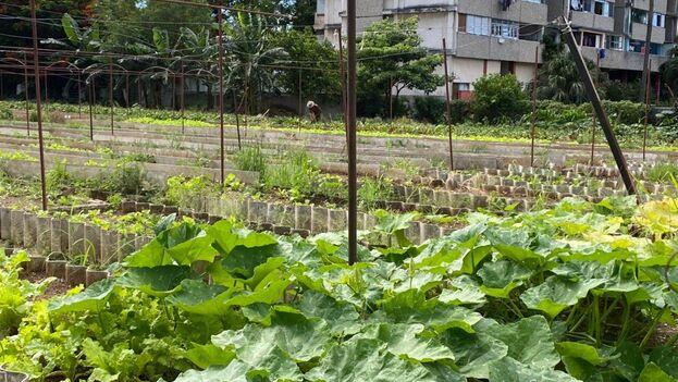 En la lista oficial de variedades comerciales de calabaza que maneja el Ministerio de la Agricultura hay casi una veintena de nombres. (14ymedio)