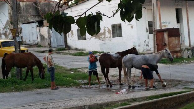 Los vecinos acuden al lugar de la rotura de la tubería para bañar a sus caballos. (14ymedio)