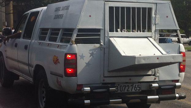 Auto del control de zoonosis para transportar perros. (Luz Escobar)