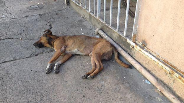 Un perro descansando. (14ymedio)