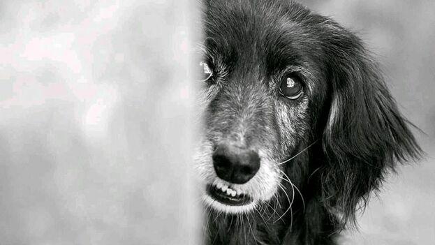 El proyecto comunitario Bienestar Animal en Cuba-BIENAC publicó en su página de la red social Facebook un cartel en el que llama a unirse con las etiquetas #SomosLaVozDeLosSinVoz