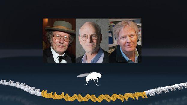Jeffrey C. Hall, Michael Rosbash y Michael W. Young recibirán el prestigioso Nobel de Medicina el 10 de diciembre. (@NobelPrize)
