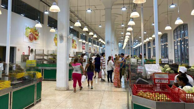 En la parte de los productos del agro del mercado de Cuatro Caminos solo había este sábado col, tomate, piña, calabaza y frutabomba. (14ymedio8)